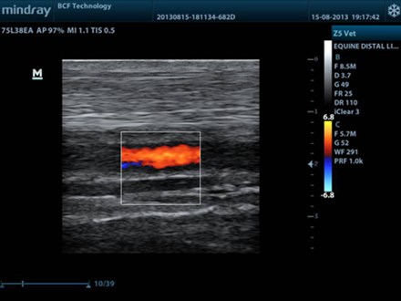 Distal limb normal equine colour Doppler Mindray Z5 75L38EA