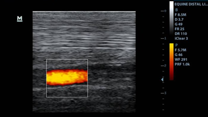 Distal limb normal equine power Doppler Mindray Z5 75L38EA