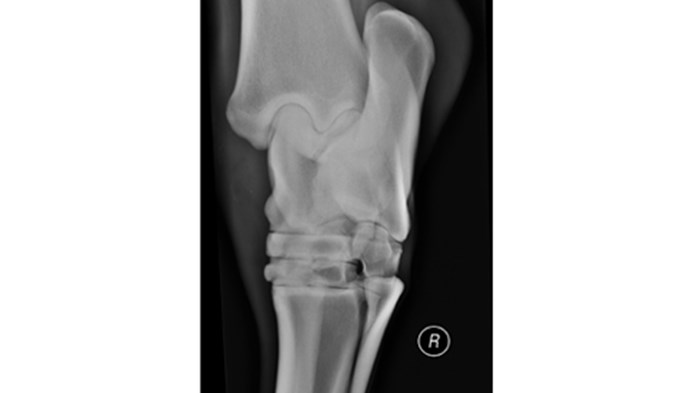 Tarsus normal equine dorsolateral plantaromedial oblique view Carestream Classic